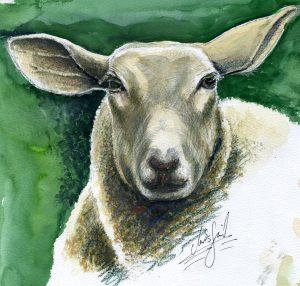 Schaf, Portrait