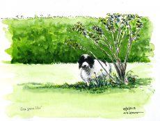 Willi im Garten