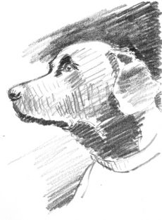 labrador-skizze