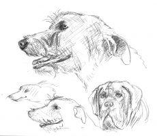wolfshund_skizze
